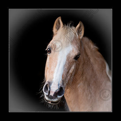Eclips 71A2763 